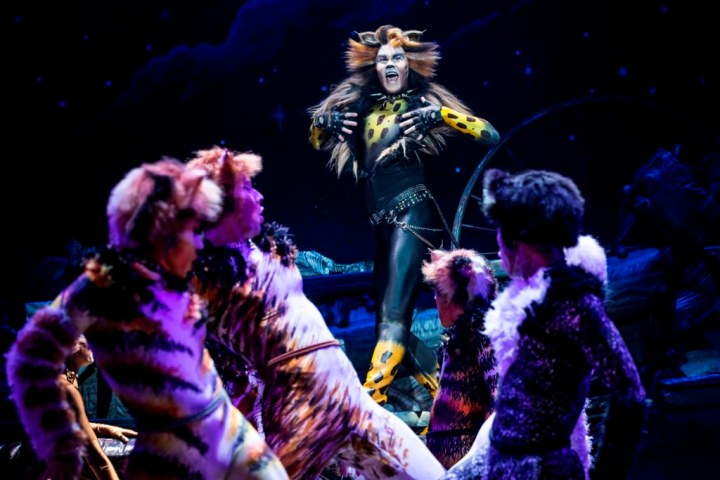 McGee Maddox as 'Rum Tug Tugger' and the North American Tour Company of CATS. Photo by Matthew Murphy. 2019